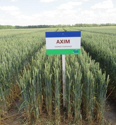 Озима м'яка пшениця АХІМ