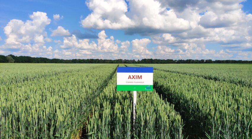 Озима м'яка пшениця АХІМ 3