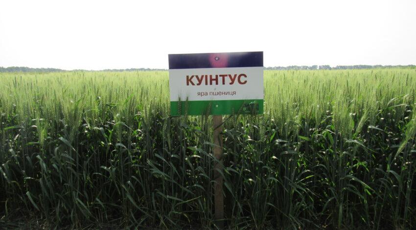 Яра пшениця КУІНТУС 4