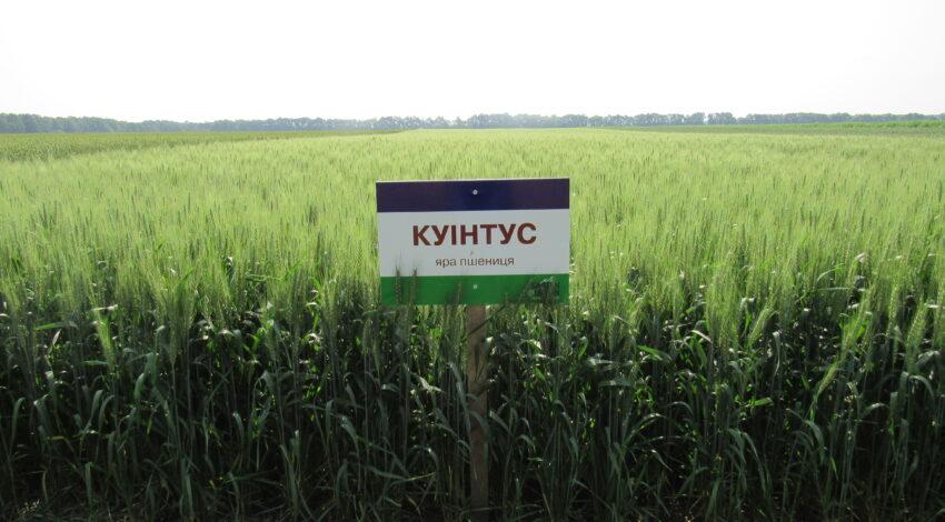 Яра пшениця КУІНТУС 3