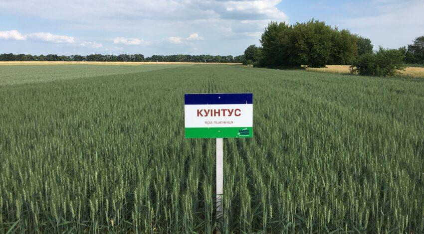 Яра пшениця КУІНТУС 2