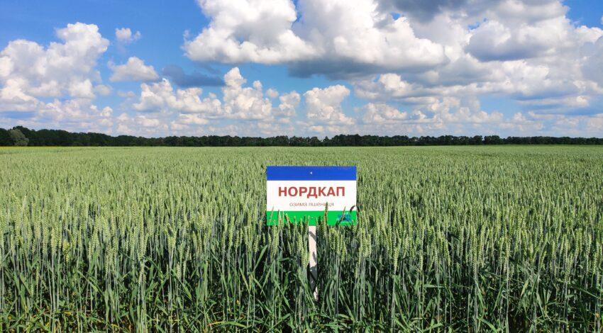 Озима м'яка пшениця НОРДКАП 3